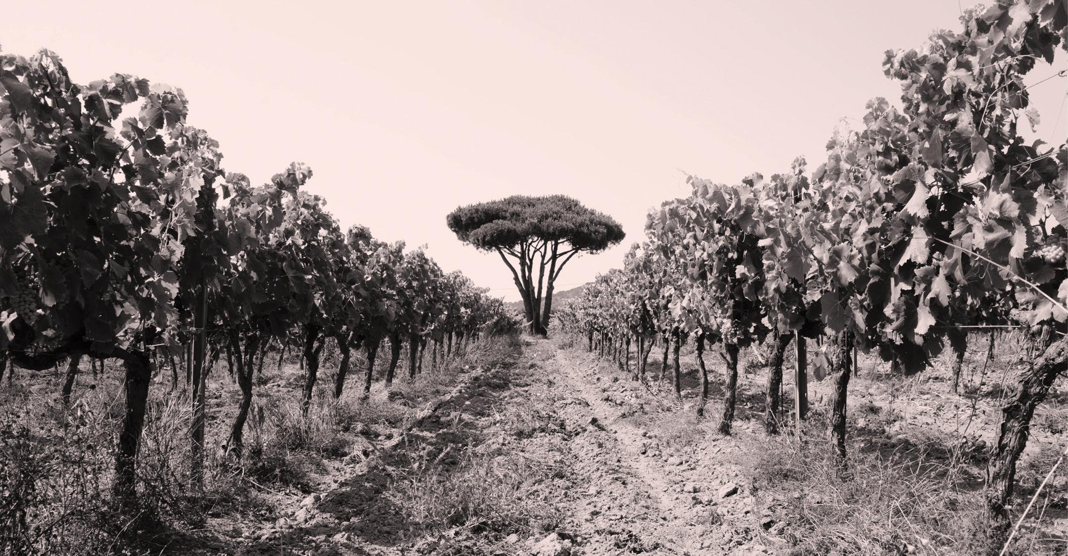 Fondugues-Pradugues Vignoble